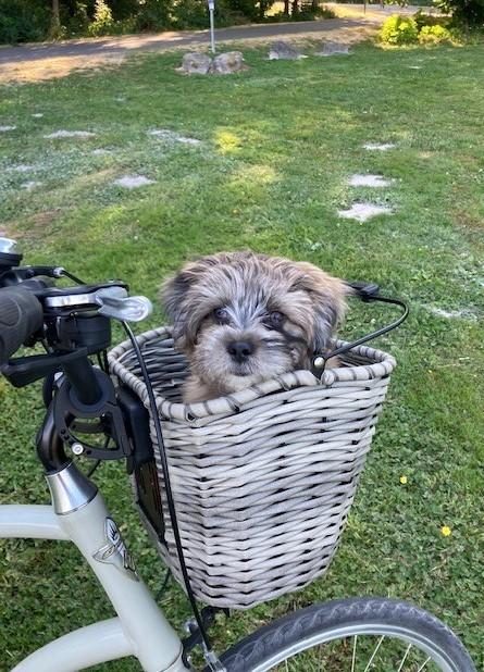 Maisy biking